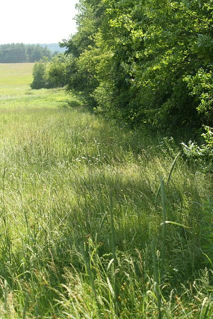 overgrown path #1
