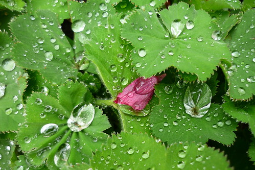 Leaves and water and petal