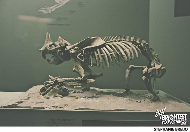 Smithsonian Dinosaur Exhibit Photos Brightest Young Things Stephanie Breijo27