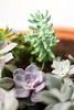 na varanda suculenta por Lúcia P.  Fralda