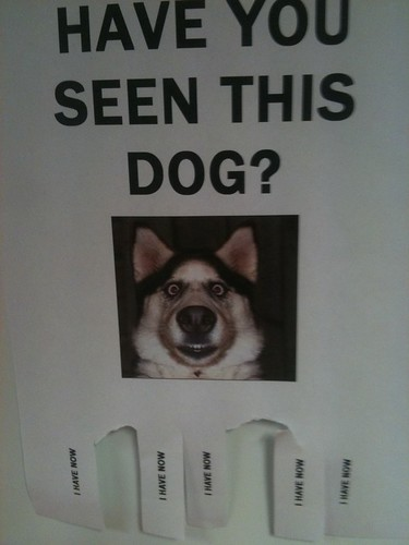 have-you-seen-this-dog_small