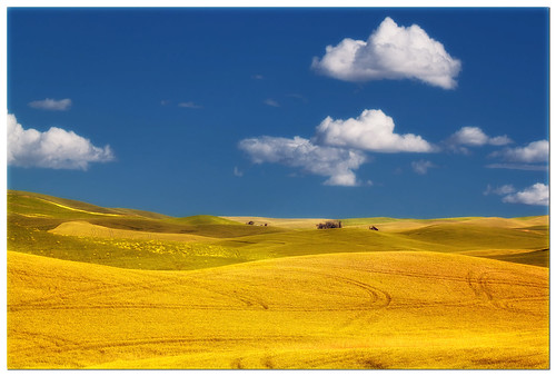 Palouse - Fields of Gold