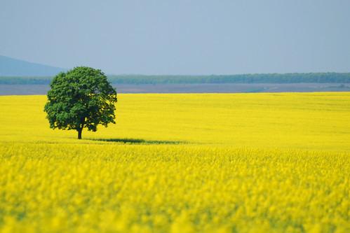 Táj - Landscape
