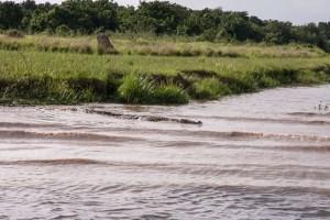 Boat Safari 23