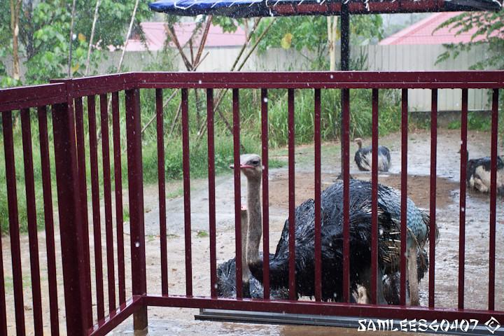 20120407 2012.04.06 Bird Paradise & Wildlfe Park @ Langkawi-34