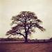 Oak Tree in Redscale Revisited