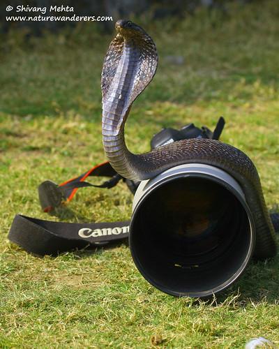 Canon's new brand ambassador!