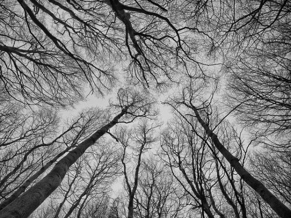Looking Up by Peter Nijenhuis