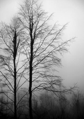 Stark against the mist - black and white