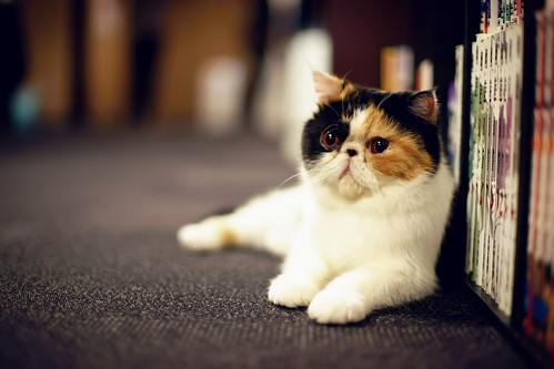 Cat Cafe Cat Round-up