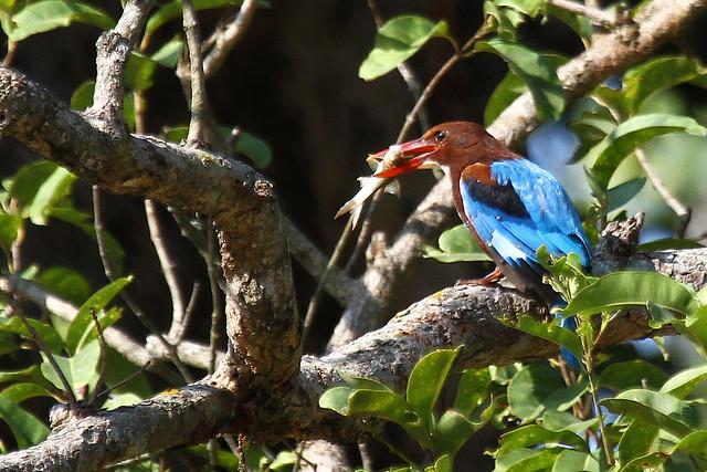 India: Birds