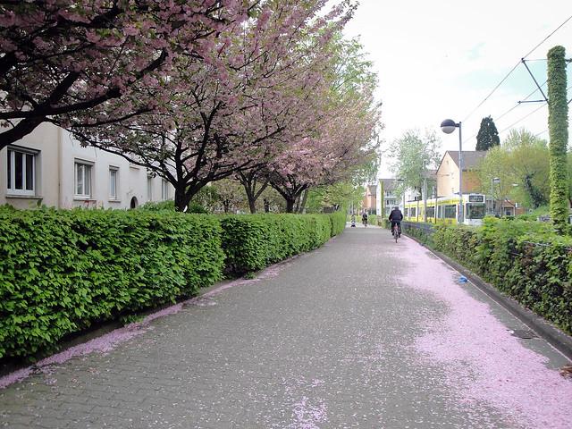 sidewalk.