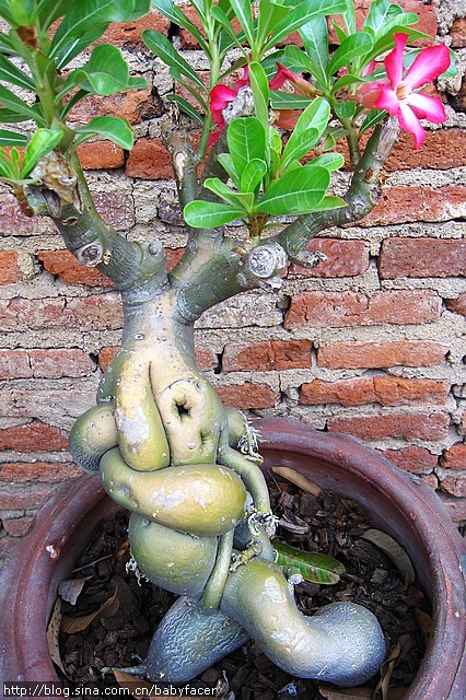 BKK_Angkor 1466