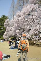 Camera ready サクラ Sakura 東京。日本. Tokyo Japan