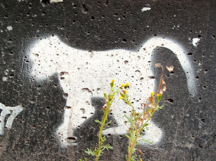 White Monkey - Stencil