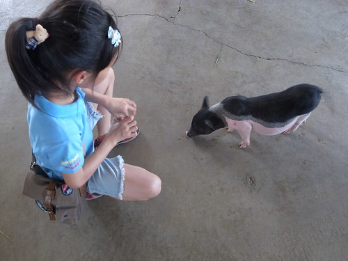 台南柳營「乳牛的家」:小動物就在你身旁(9.8ys)