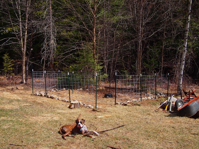 The Backyard Pig Pen under construction
