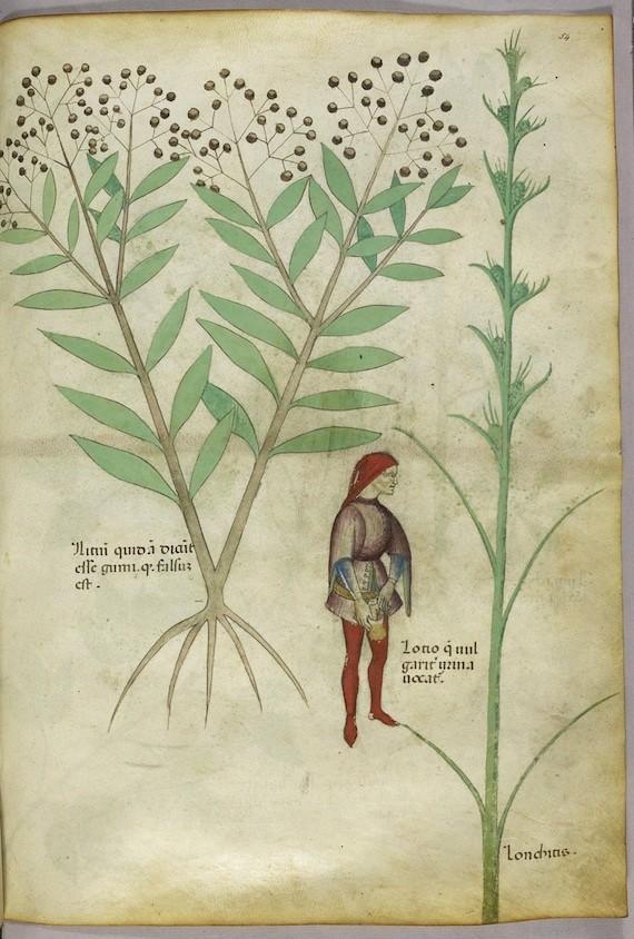 Tractatus De Herbis Ca 1440 The Public Domain Review