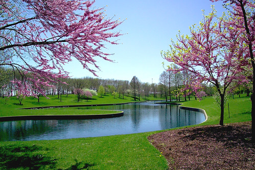 Picture of red bud trees surrounding a pond