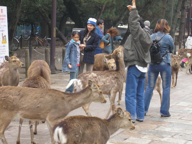 Deer harrassing tourist!
