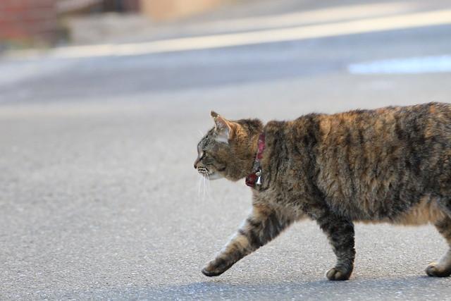 cat, hurry-up job ?