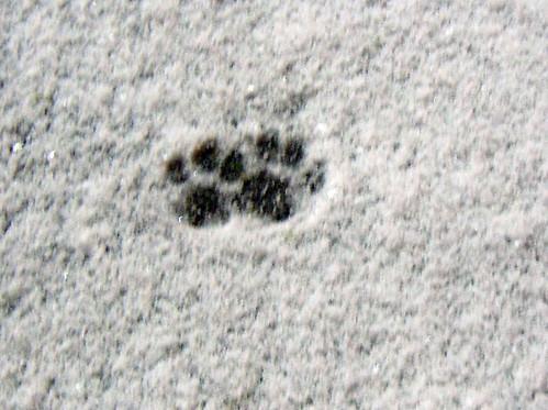 snowprintsN1575