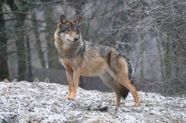 Серый волк: alionushka1 — LiveJournal