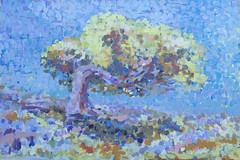 Holm Oak, Ikaria