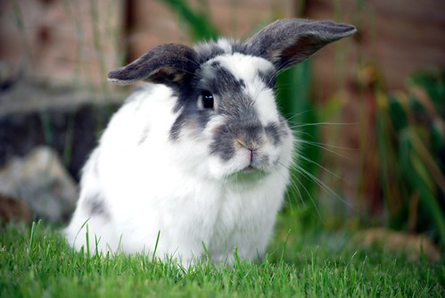 Georgie's Rabbits.
