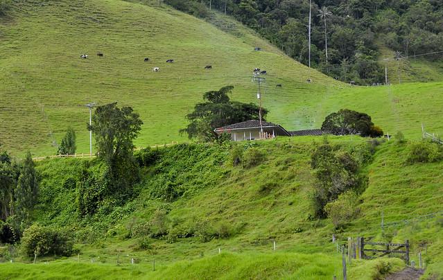 Finca in Valle de Cocora