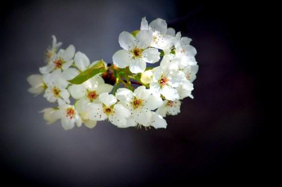 Lomo ish Effect Flowers