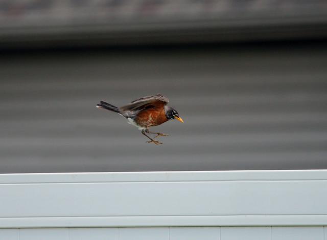 5/21/12 - Go ahead and JUMP!