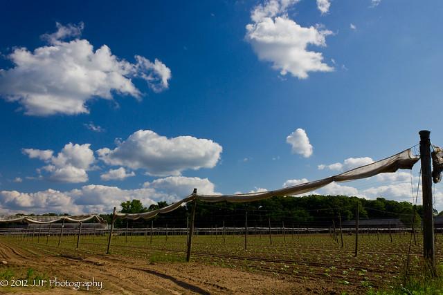 2012_Jun_14_Tobacco Field_011
