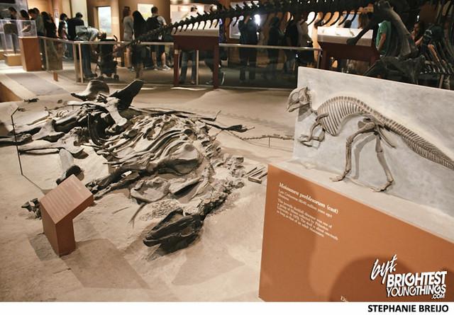 Smithsonian Dinosaur Exhibit Photos Brightest Young Things Stephanie Breijo9