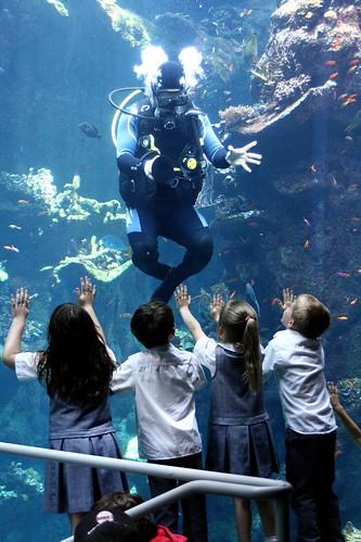 Underwater greetings