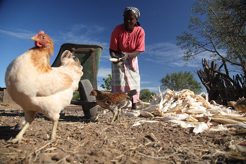 Mozambican smallholder farmer