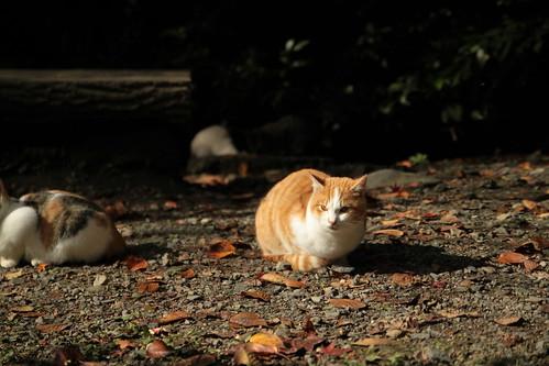 哲学の道 京都の紅葉