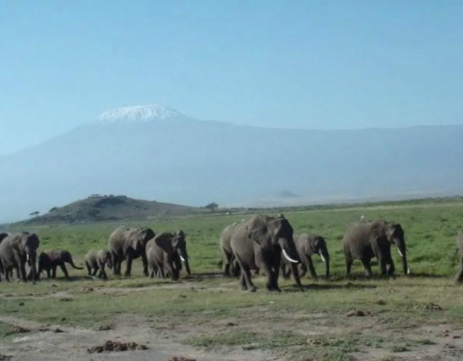 video 3 animales Parque Nacional Amboseli Kilimanjaro Kenia
