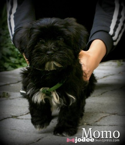 Momo at 10 weeks old