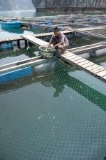 Schwimmende Fischzucht - Ha Long
