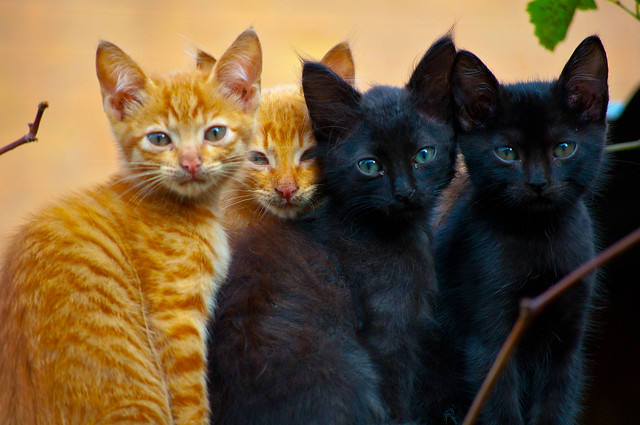 Photo:cats group photo By:S@veOurSm:)e
