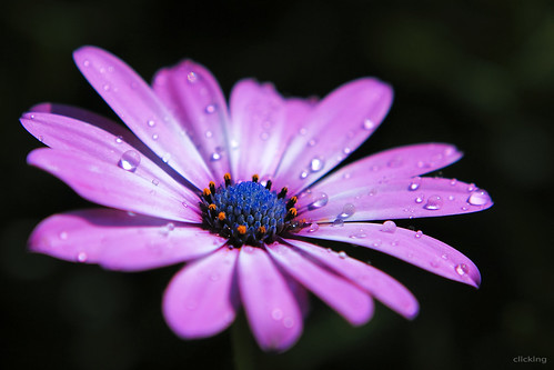 The raindrops on flower