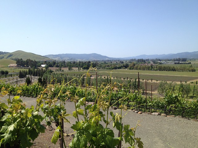 Sonoma Valley view, Viansa Winery