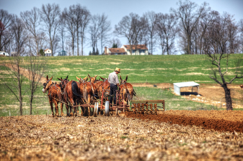 Hard at work plowing the fields.
