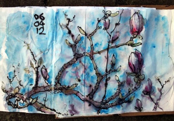 magnolia 060412