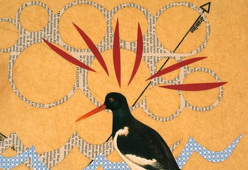 Bird Collage - Black Oyster Catcher