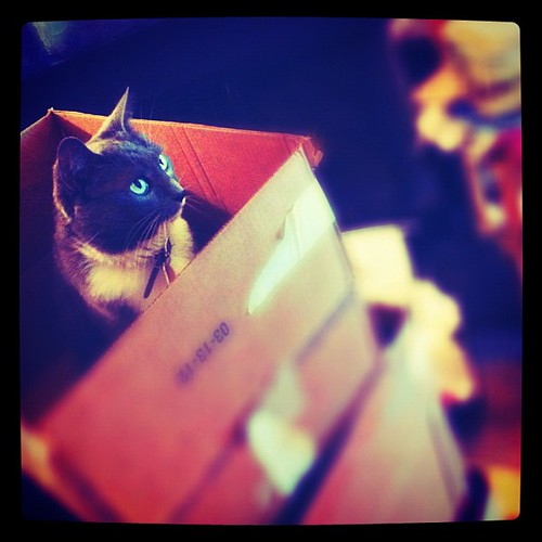 342: kitties helping with boxing the house.