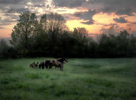 Broodmares and Foals at Dawn