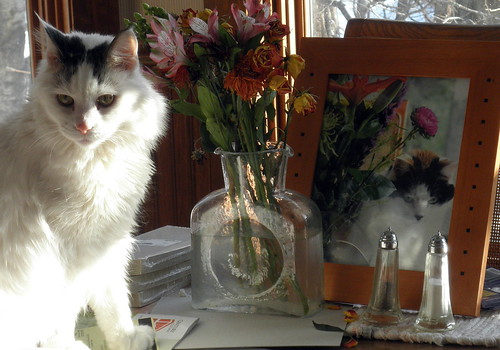 Bubba Remembers Kate by Lady Birchwood