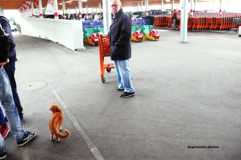 Mr. Swiss and the Migros cat
